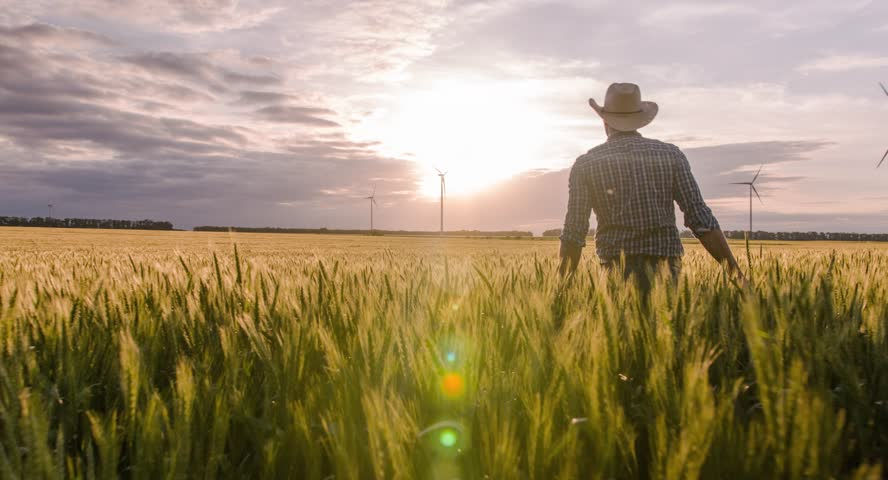 Wheat Field Farmer Walking Windmill Sunlight Landscape Nature Agriculture Growth Drone Footage Man Sky Renewable Energy