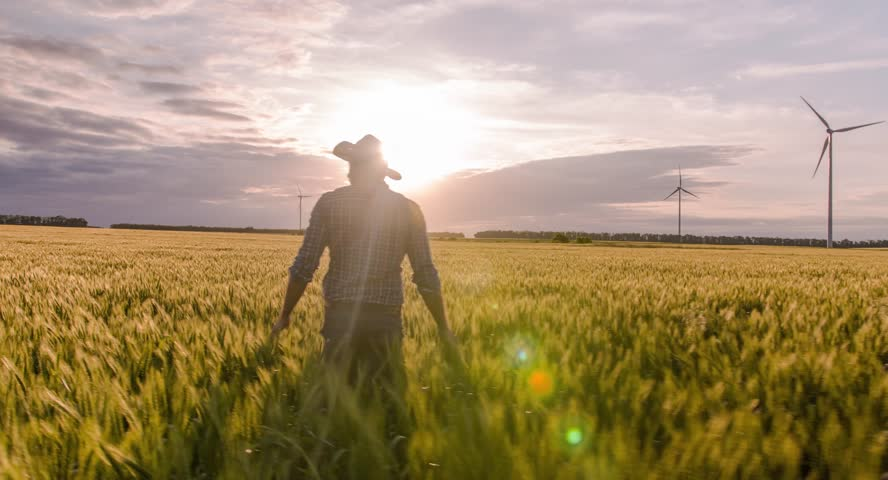 Farmer Walking Wheat Field Windmill Sunlight Agriculture Landscape Nature Growth Drone Footage Man Sky Renewable Energy