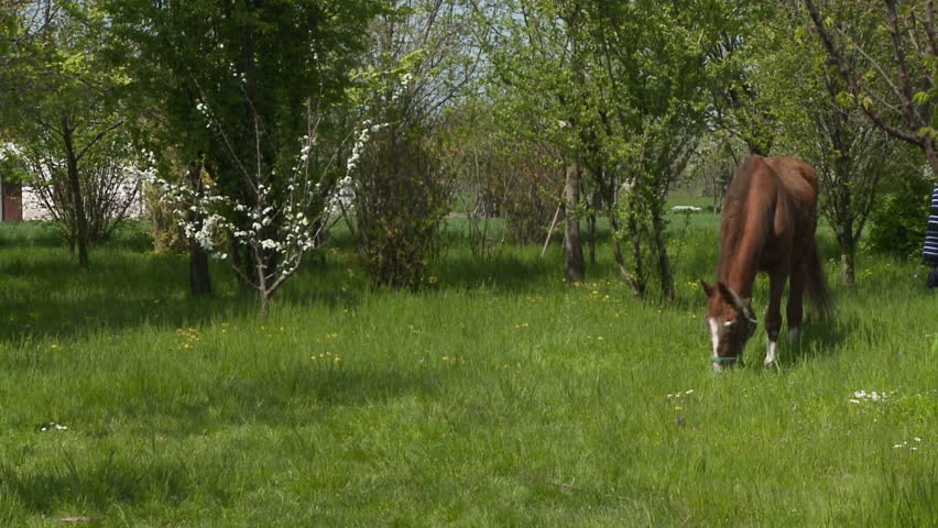 Brown Horses Grazing On The Edge Of The Forest Stock