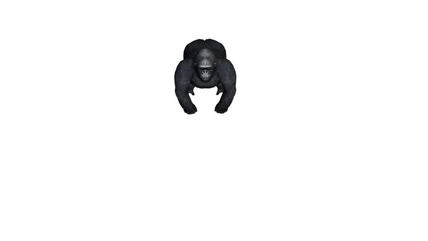 Chimp Chimpanzee Attack,endangered Wild Animal anthropomorphism  Stock  Footage Video (100% Royalty-free) 14831830   Shutterstock