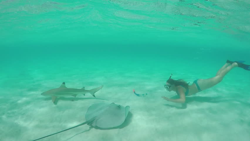SLOW MOTION UNDERWATER:: Young woman snorkeling and swimming underwater with stingray rays, fishes and sharks in beautiful blue lagoon on exotic island in sunny summer #14898730