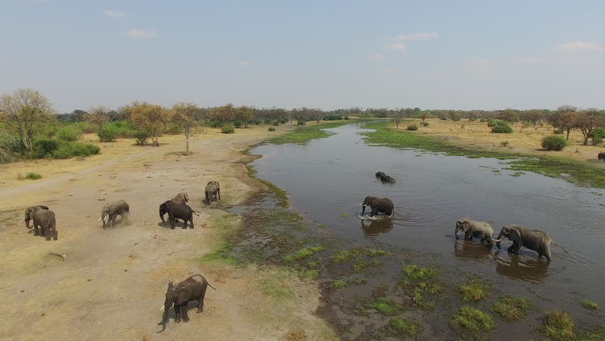 4K Aerial shot of elephants drinking at a river in the Okavango Delta - Botswana