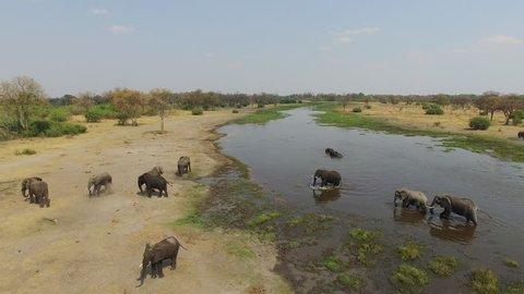 4K Aerial shot of elephants drinking at a river in the Okavango Delta - Botswana