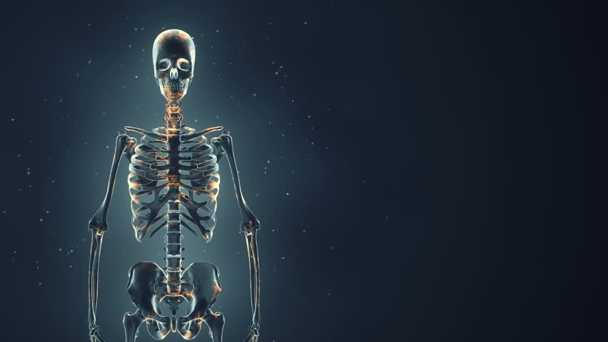 abstract background with animation of rotation realistic human, Skeleton