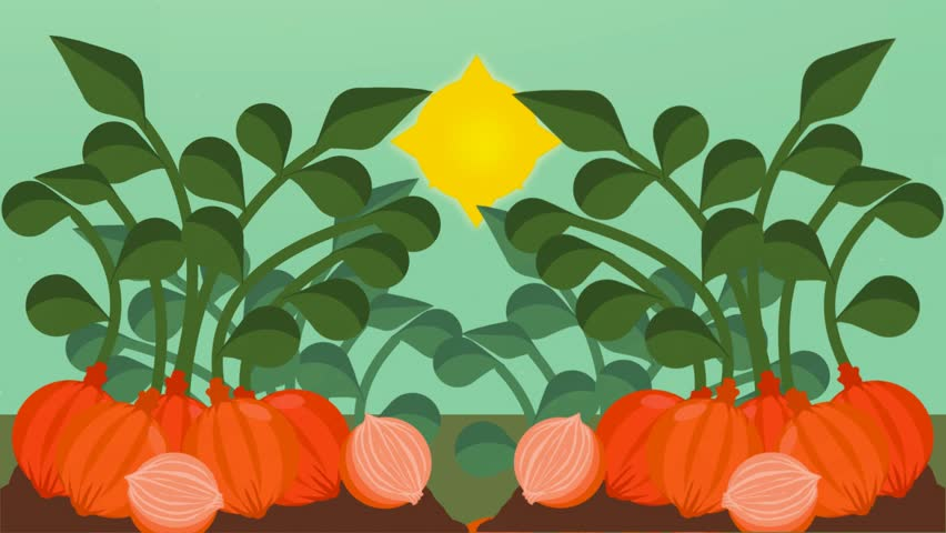 Agriculture in animation, plants growing up