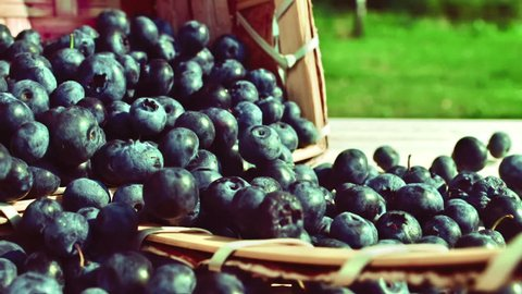 Blueberries are poured out from a basket on a wooden table, slow motion