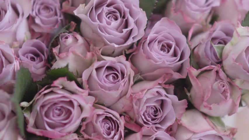 Gorgeous pink flowers stock footage video 100 royalty free hd0030gorgeous pink flowers mightylinksfo