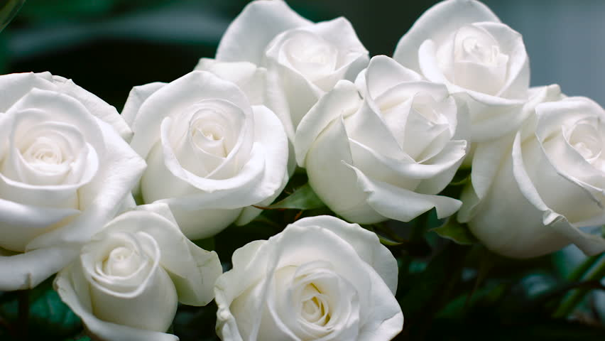 Stock video clip of a bouquet of white roses pure white shutterstock mightylinksfo