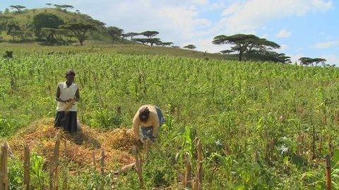 Two women work in the fields on a farm circa 2009 in Kenya.