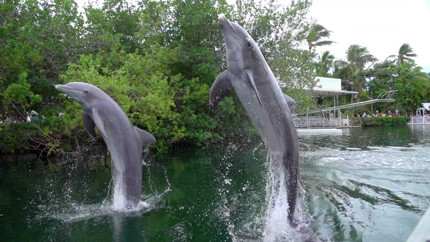 Dolphin jumping out of water in slow motion