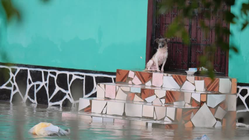 Dog abandoned  on the flooded neighborhood, Leon, Nicaragua