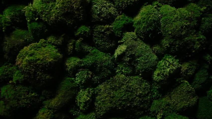 Dark green moss grows on the stones | Shutterstock HD Video #15435223