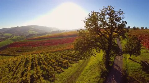Aerial view of spectacular and colorful autumn Vineyard in italian countryside. Castelvetro di Modena, Italy.