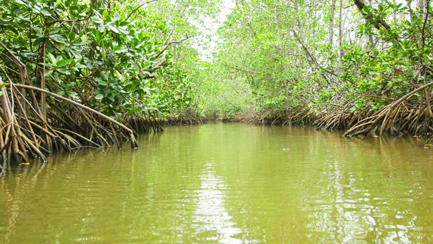 mangrove forest Mangrove forest, jakarta: see 87 reviews, articles, and 150 photos of mangrove forest, ranked no17 on tripadvisor among 46 attractions in jakarta.