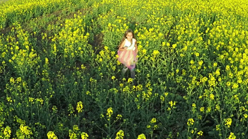 Beauty young girl running on yellow rape field in rural countryside. Happy Freedom woman outdoors concept. Aerial flight over the rape field in sunset light, Aerial shot