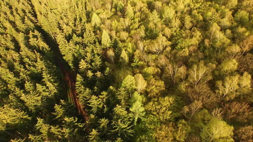 Flight over beautiful green forest | Shutterstock HD Video #16158760