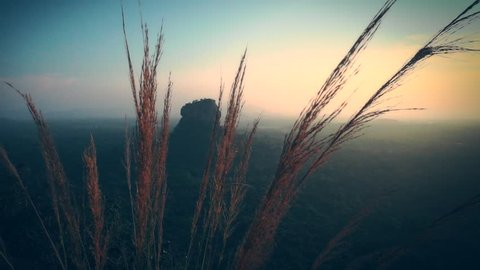View over grass on Lion Rock in Sigiriya during sunset, Sri Lanka. Aerial view of the tropical forest with mountains. Tilting shot, slow motion.