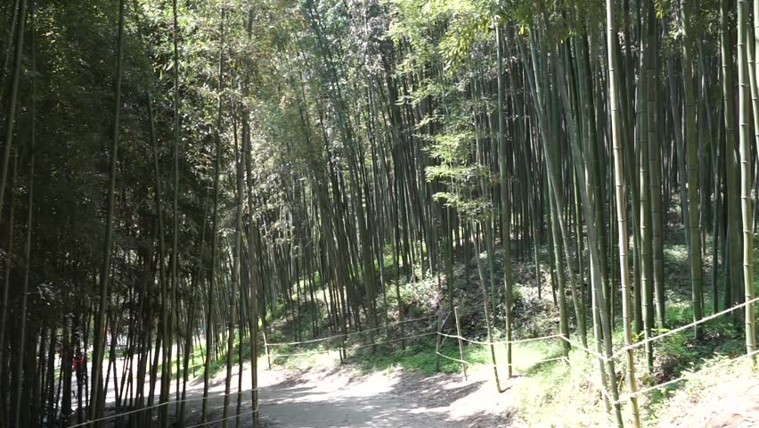 damyang south korea april 2016 juknokwon bamboo garden walkway between bamboo - Bamboo Garden 2016