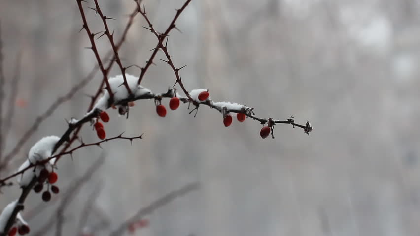 Snowing, Wintertime | Shutterstock HD Video #16386640