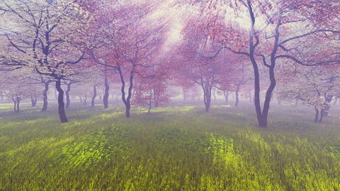 Cherry orchard in full bloom basking in sunlight and pink flower petals falling down on the ground covered with fresh green grass. Realistic 3D animation.