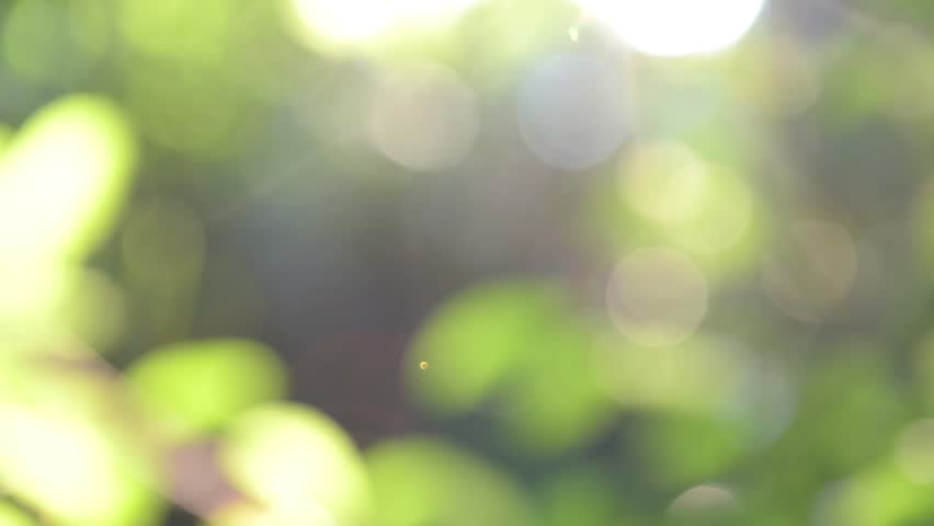 Sunlight shines through the leaves out of focus, natural green background
