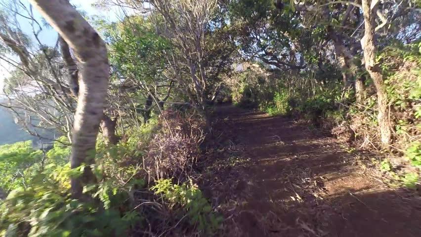 First person view of trail runner on Waahila ridge trail just outside Honolulu, Hawaii | Shutterstock HD Video #16893130