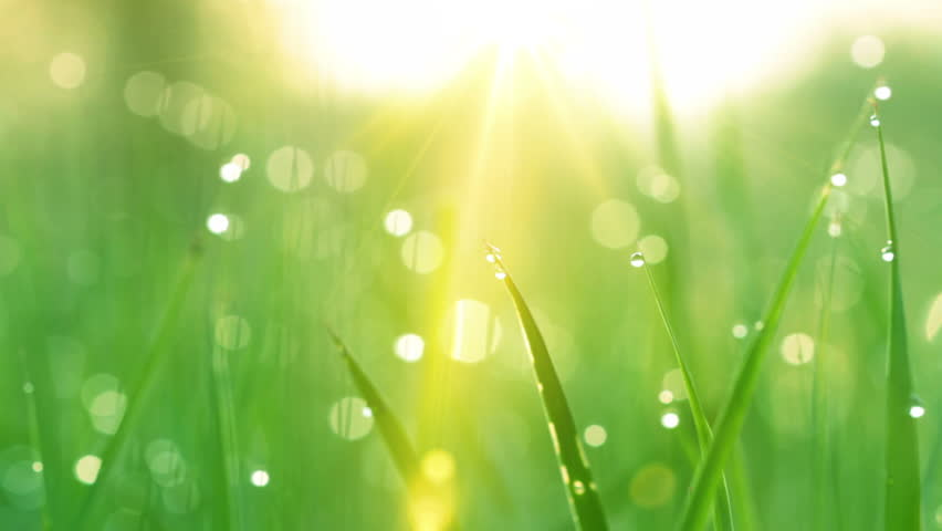 blurred grass background with water drops and rays of sun. HD shot with motorized slider.  #1690921