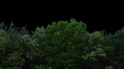 High quality 10bit footage of trees in motion without destructive color correction and ready for use as background in post-production through its alpha channel.(ProRes 4444).  Made from RAW footage.