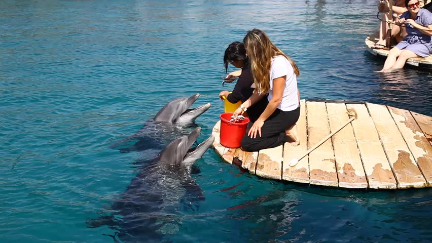EILAT, ISRAEL - CIRCA FEB 2011: Dolphins are fed at a resort circa February 2011 in Eilat.