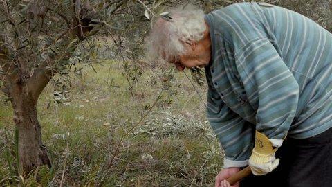 Elder farmer at his olive tree field using a pickax,ploughing.An elder retired farmer is tending to his olive trees at his small farm/field.Gimbal steadicam shot slow motion.
