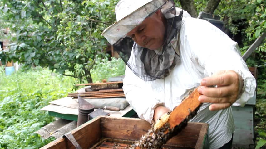 A Beekeeper Inspects Hive Of Bees Before Pumping Honey From The Honeycomb Cultivation