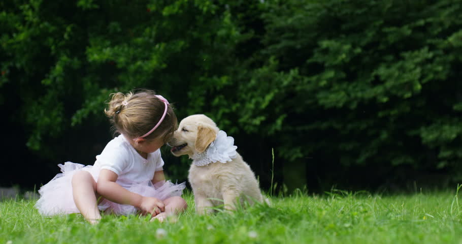 a small girl dressed as a little dancer kissing her little friend puppy dog ??golden retriever sitting on a lawn and happiness  concept of friendship , friendship between dogs and humans . connection