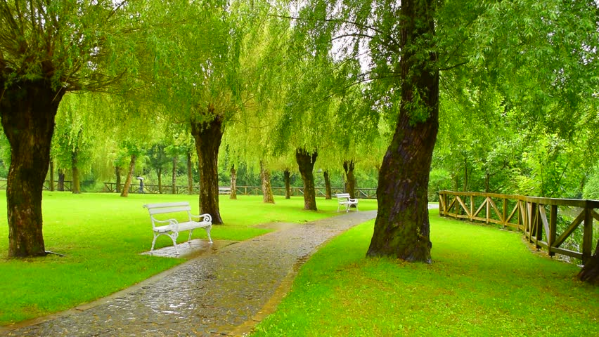 Rain In The Green Summer Stock Footage Video 100 Royalty