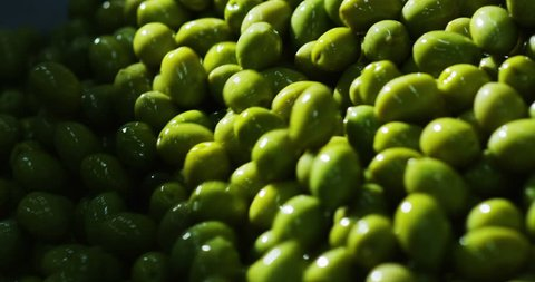 n an Italian industry the olives fall one above the other and flow as they go forward to be boxed