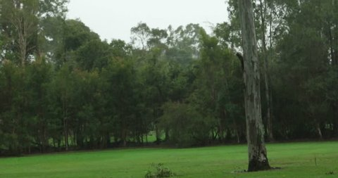 low pressure la nina rain on gum trees Australia