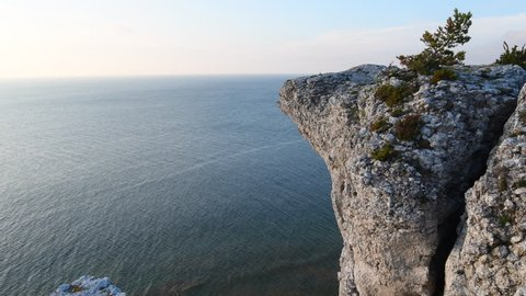 Spruce growing on a limestone cliff on the island of Gotland in Sweden