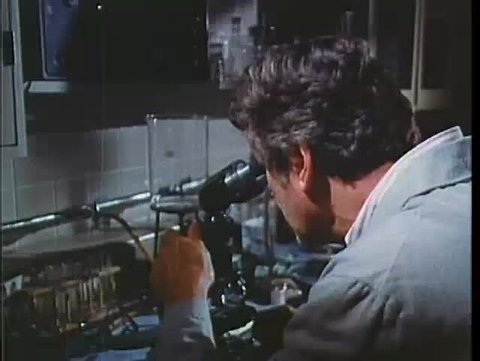Scientist viewing animal cells on computer screen in lab, 1970s