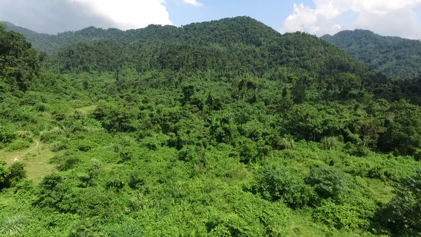 Aerial video above tropical forest in a sunny day   Shutterstock HD Video #17533528