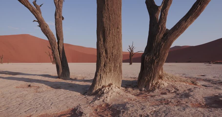 4K moving shot of dead trees in Dead vlei   | Shutterstock HD Video #17560240