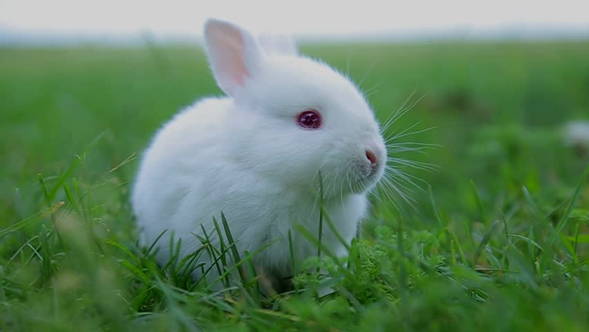 rabbit on green grass, white rabbit little rabbit, Little white bunny