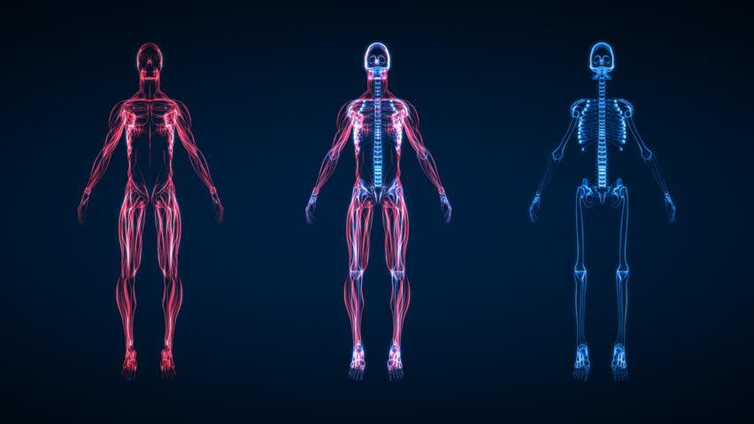 X-Ray Scan of Human Skeleton HD | Shutterstock HD Video #1762700