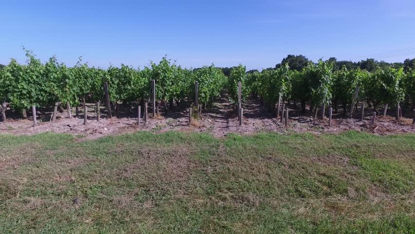 Beautiful vineyard on the beginning of summer | Shutterstock HD Video #17846440