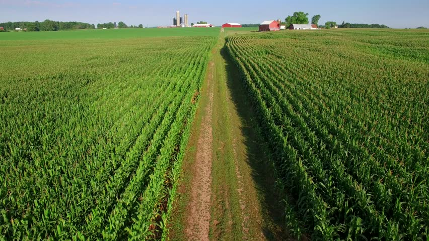 Scenic dirt road through corn fields, farms in distance, aerial view.