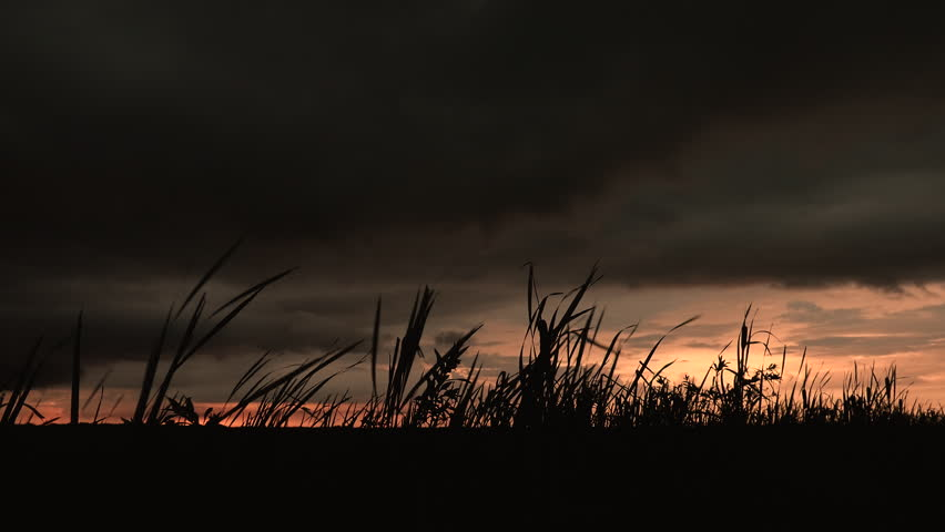 4K - Dark stormy skies at sunset with silhouette grass and cattails blowing in the wind.