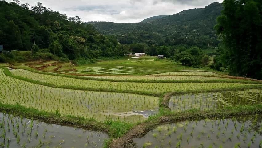 Rice terrace   Shutterstock HD Video #18240157