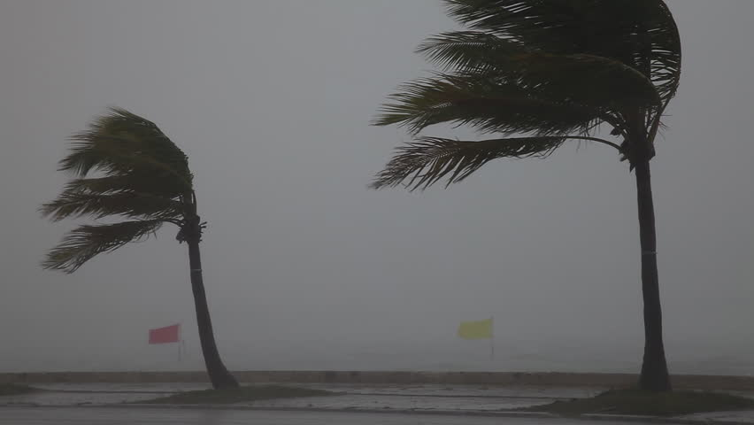 Key West, FL/US - August 26, 2012 [Hurricane force winds blast palm trees in Key West, Florida as Isaac passes just offshore the island.]