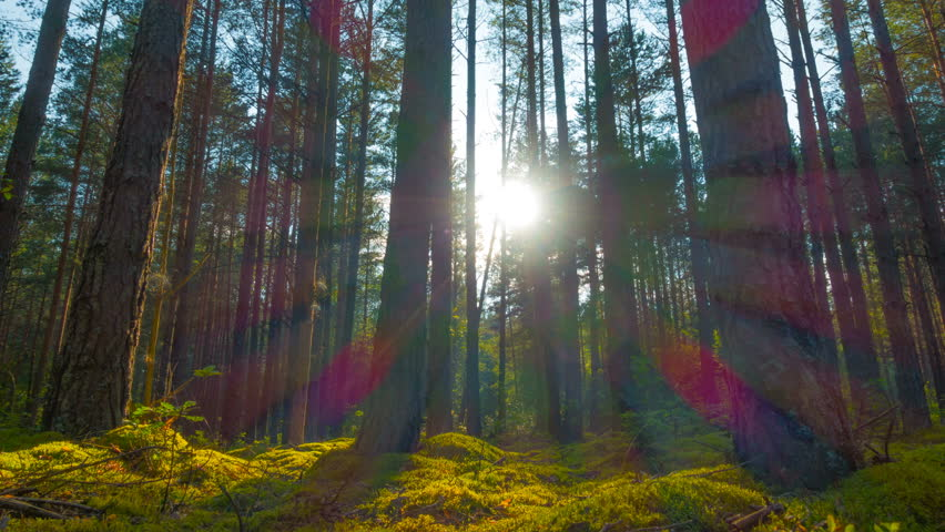 Sunset in the summer magic forest, panoramic time-lapse  #18390310