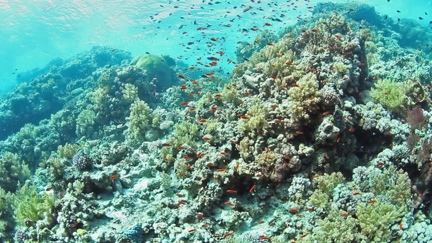 Tropical coral reef and fishes on Red Sea.