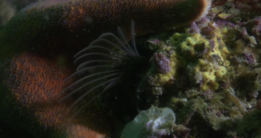 Header of acorn barnacle