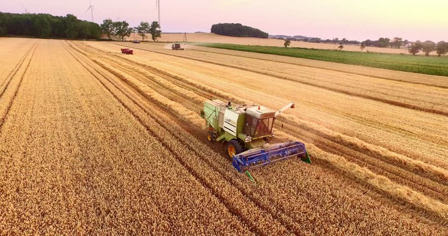 Aerial view Combine Harvester gathers the wheat at sunset. Harvesting grain field, crop season. 4K. Beautiful natural aerial landscape. Food industry concept.